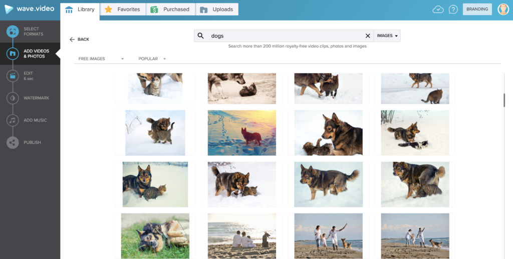 "A photograph of the image library for the keyword ""dog"" in Wave.video."