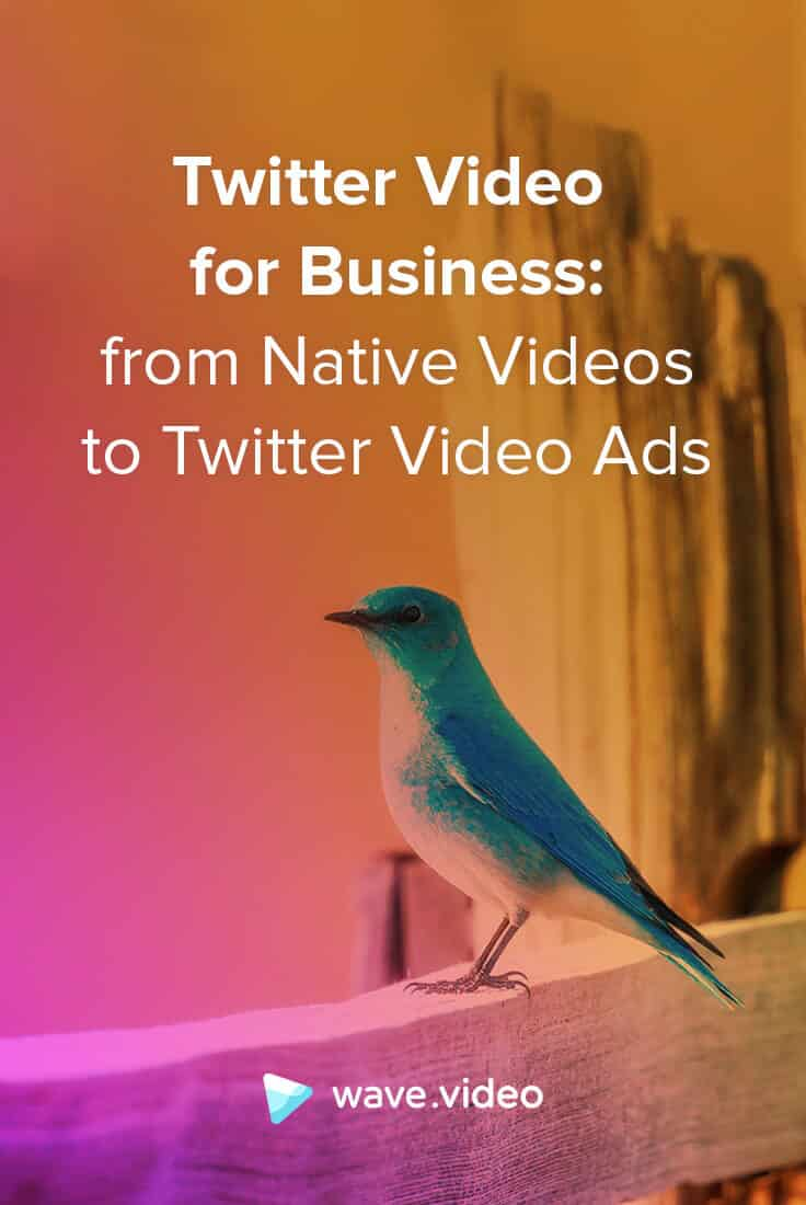 Twitter Video for Business: from Native Videos to Twitter Video Ads
