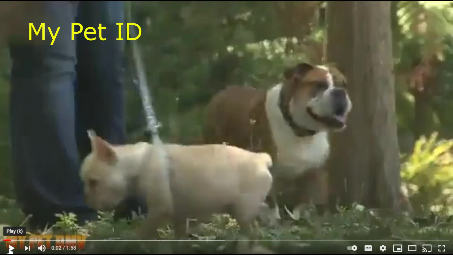 Pet Driver's License ID