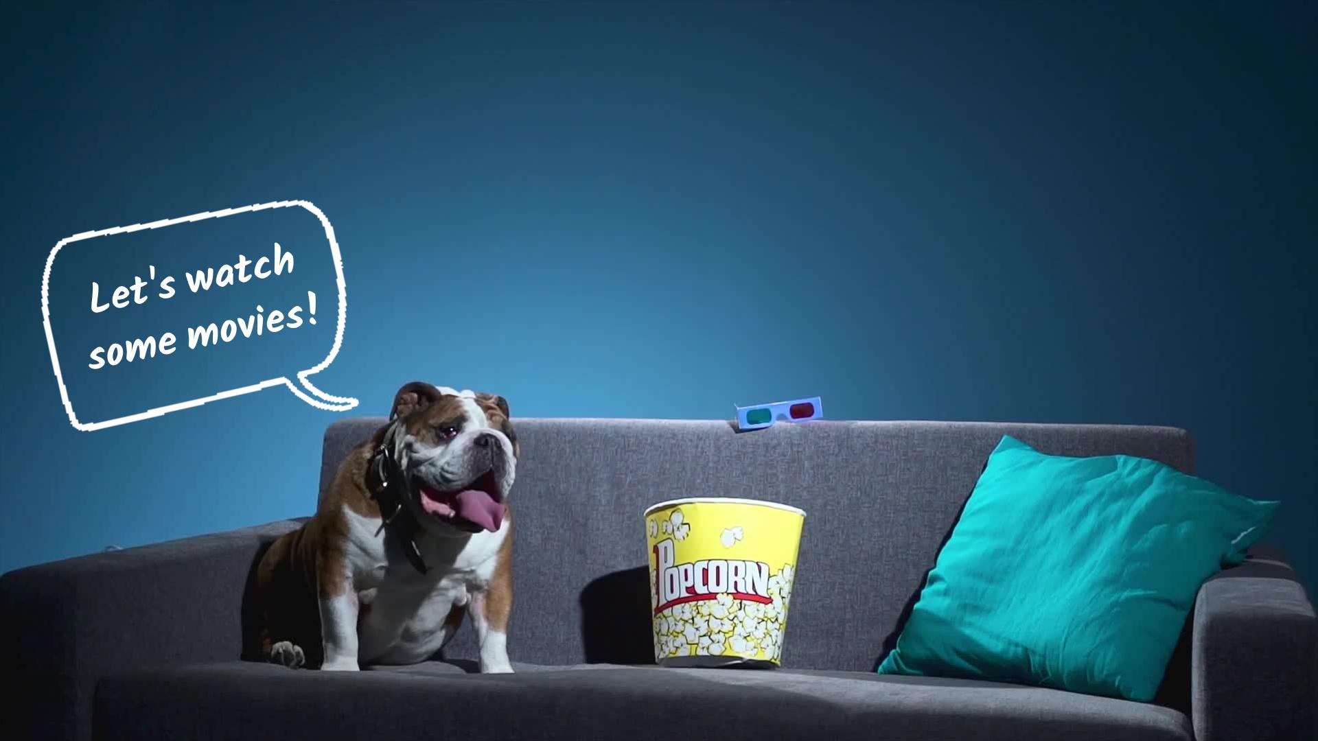 Dog Cinema Lover