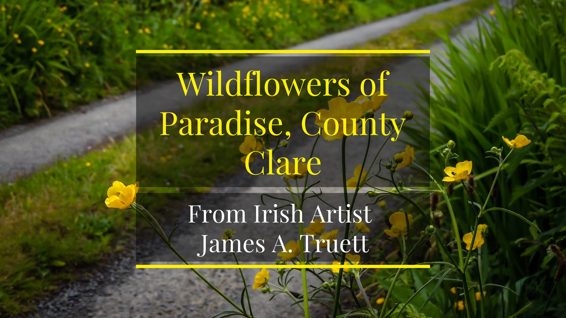 Wildflowers of Paradise, County Clare