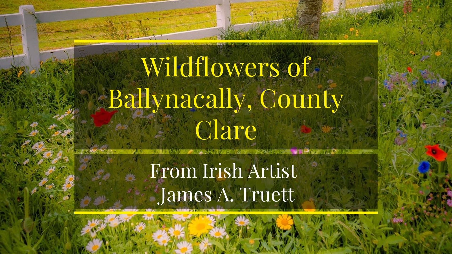 Wild Flowers of Ballynacally, County Clare